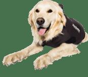 Jacketz Medical Body Suit für Hunde - Jacketz Medical Body Anzugshund S