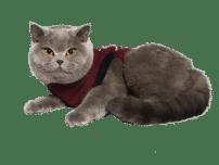 Jacketz Medical Body Suit für Katzen - Jacketz Medical Body Suit Katze XS