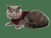 Jacketz Medical Body Suit für Katzen - Jacketz Medical Body Anzug Katze S